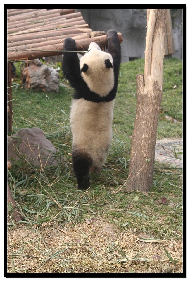 熊猫的午餐-喜欢玩具的孩子内心都住着一个小可爱
