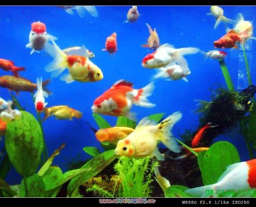 壁纸 动物 海底 海底世界 海洋馆 水族馆 鱼 鱼类 500_405