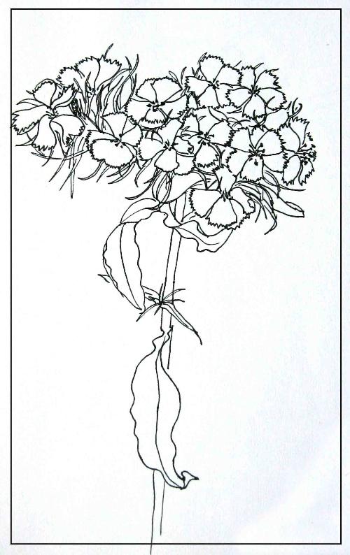 写生线描--花卉