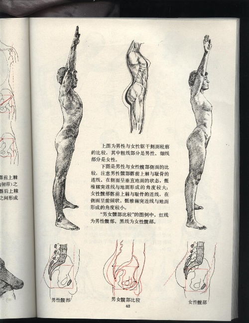 艺用人体结构运动学-8期学习空间-搜狐博客