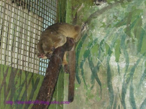 北京动物园蜜熊