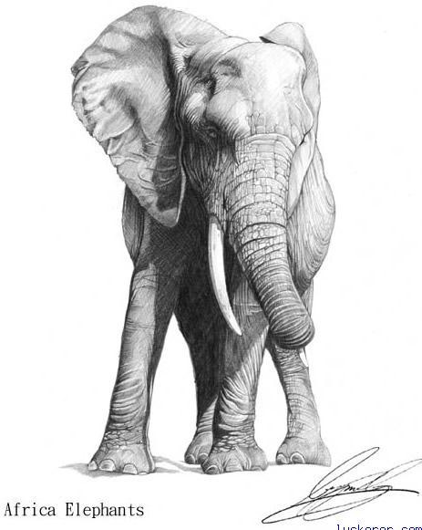 铅笔白描图片动物猛虎