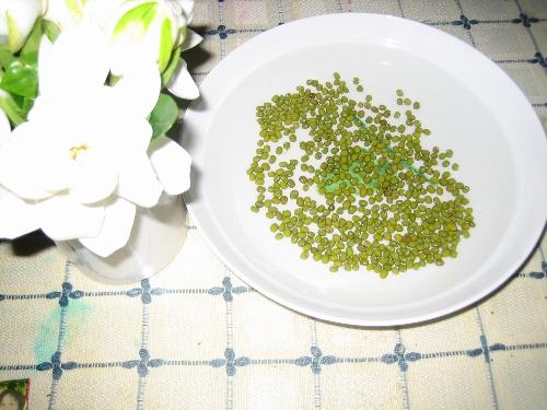 绿豆芽可生长多少天 绿豆芽生长过程第3天至第10天多