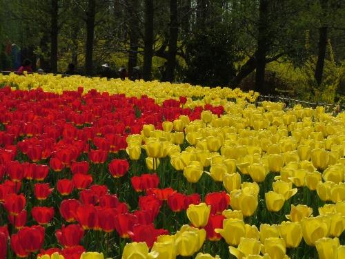 分为中山公园到太平山,太平山到植物园两条线路,两线往返约需30分钟.
