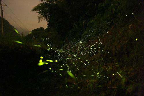 童话夜空中的萤火虫 转>
