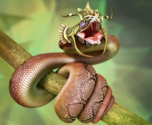 蛇的头的结构图