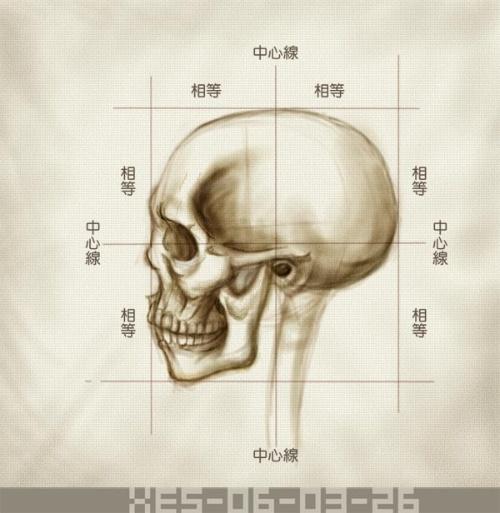 头部(侧脸结构比例图)-魔昕的游乐园-我的搜狐; 脸部骨头结构图_脸部