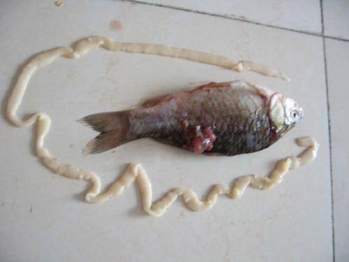 鲫鱼 肚子里面的虫子