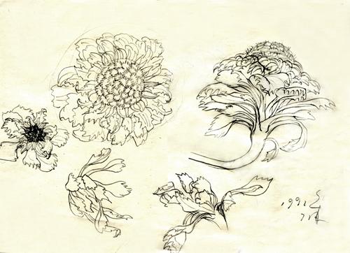 当时的速写 王宏和她的画的博客 我的搜狐